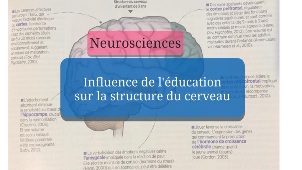 Influence de l'éducation sur la structure du cerveau
